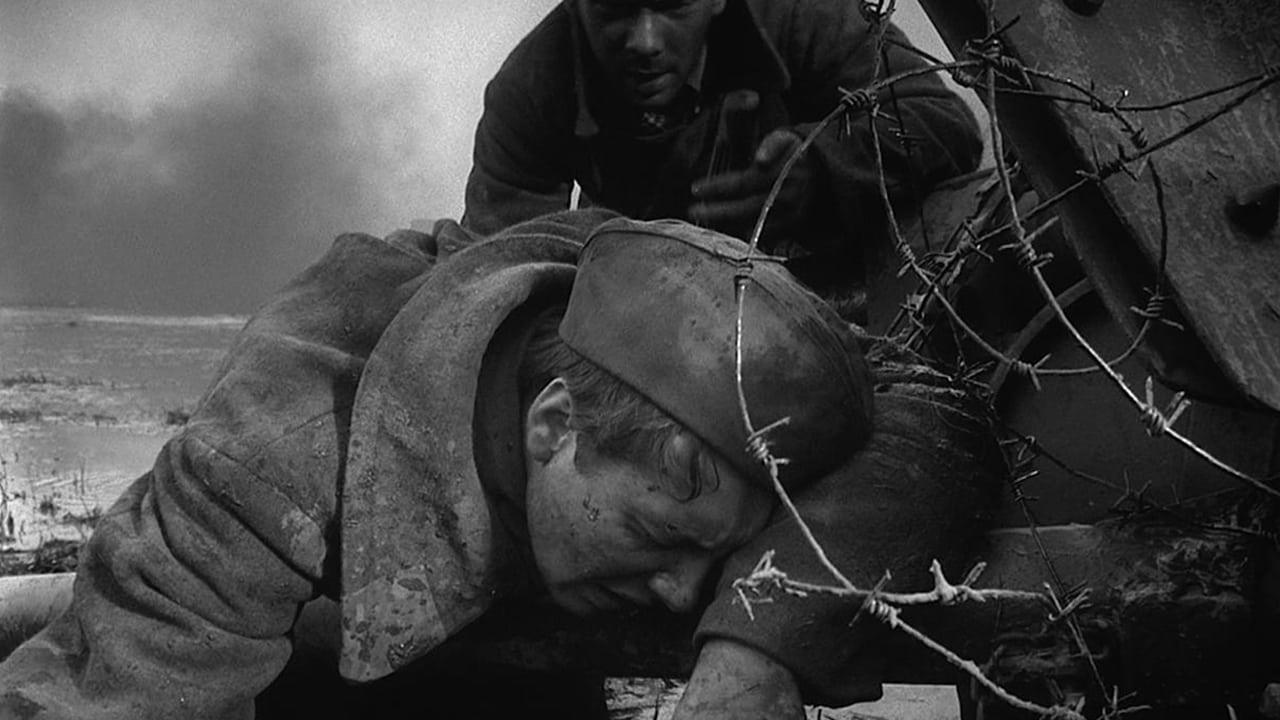 Кадры из фильма  Летят журавли 1957