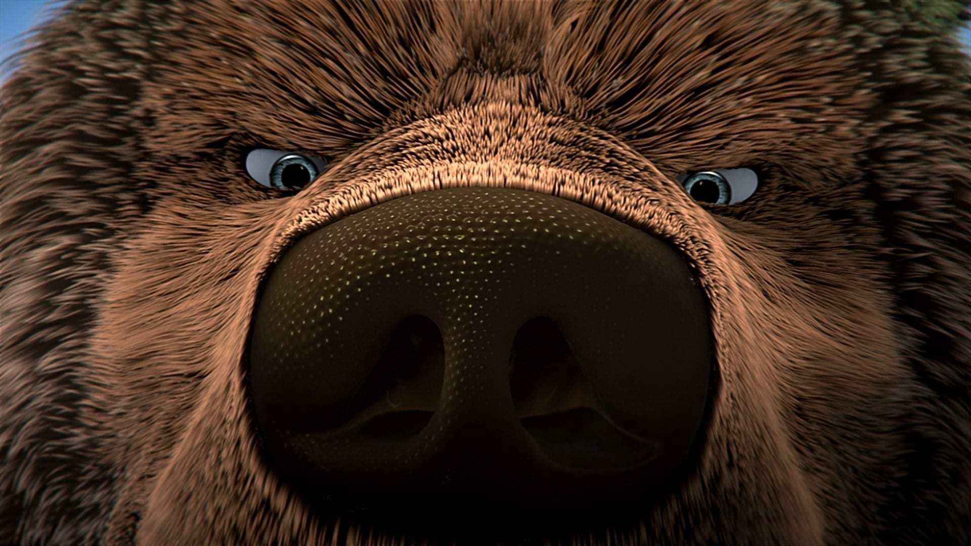 Кадры из фильма Как приручить медведя Den kæmpestore bjørn 2011