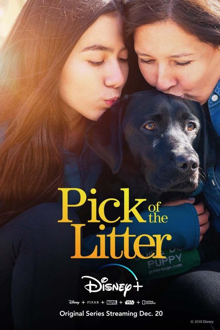 Постер фильма  Pick of the Litter 2019